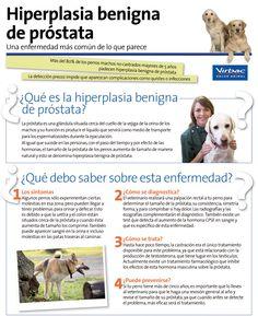 Hiperplasia benigna de #próstata en perros.