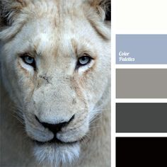This monochrome palette diluted with pale cornflower blue is ideal for bedroom decoration.