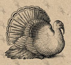 Vintage black and white image Thanksgiving Day Turkey  от UnoPrint