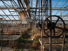 The occupants of a greenhouse, abandoned for nearly 10 years, erupt from their pots. [Ohio]