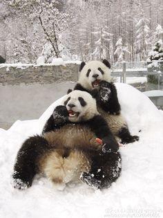 An old photo of Tuan Tuan and Yuan Yuan