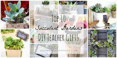 Top 10 DIY Succulent
