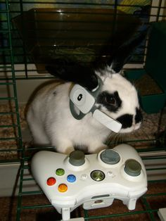 Are Fierce Gamers | Community Post: 18 More Surprising Things That Bunnies Do
