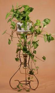 Arrowhead Planta de jardinería De Interiores del Camino Orgánica
