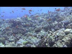 沖縄ケラマ・ドリフトダイビング Part 2 黒島北ツインロック (2014.9.3) Drift diving in Okinawa Kerama Islands - YouTube