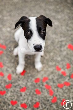Australian HeARTs Speak member Ruth O'Leary has a special talent for capturing soulful portraits of adoptable pets. Like this one of her foster pup Mariachi, now adopted!