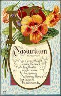 Nasturtium vintage flower card
