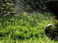 Semaine après semaine, tonte après tonte, vous emmagasinez une quantité d'herbe coupée de plus en plus importante ! Que faire de tout ces déchets de tonte ? Sachez qu'il s'agit là d'une source particulièrement précieuse et riche en matières organiques qu'il serait dommage de ne pas utiliser alors qu'il y a tant de possibilités pour …