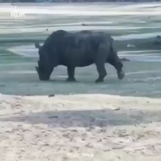 Humor Discover Dont get in a rhinos personal space - Tiere - Animals Funny Animal Videos Cute Funny Animals Funny Animal Pictures Nature Animals Animals And Pets Baby Animals Wild Animals Videos Wildlife Nature Beautiful Creatures Funny Animal Videos, Cute Funny Animals, Funny Animal Pictures, Funny Cute, Wtf Funny, Funny Memes, Nature Animals, Animals And Pets, Baby Animals