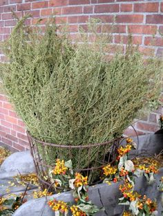 2018 Harvest Perfect for filling your old crock, Prim Basket or Hung on the wall Each bunch averages over 5 inches wide and long. Dried Flower Arrangements, Dried Flowers, Craft Font, Sweet Annie, Old Crocks, Bee Skep, Potpourri, Gourds, Decor Crafts