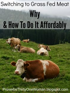 Switching to Grass Fed Beef: Why & How to Do it Affordably | Proverbs 31 Woman