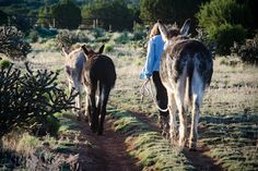 Courtesy: Linda Carson, 7 Miles South of Nowhere, New Mexico (USA).