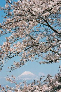 sakura, Shizuoka, Japan