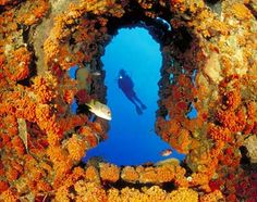 Bonaire is a carribean island whose economy is driven mainly by diving