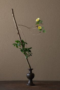 2012年1月14日(土)    硬軟のとりあわせ。どちらかだけではつまらない。  花=柘植(ツゲ)、菊(キク)  器=古銅亜字形華瓶(鎌倉時代)