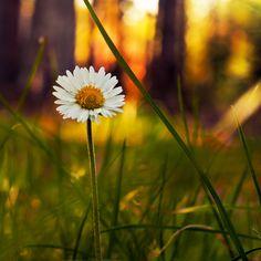 Forest flower 02 by rejmann