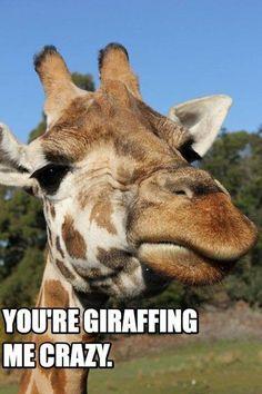 You're giraffing me crazy..