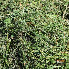 #AlfalfaHay  #Animalfeed #feed #wholesaleanimalfeed   #Hay #eTradePakistan #WholesaleAlfalfahay Alfalfa Hay, Horse Hay, Cattle, Barn, Herbs, Gado Gado, Converted Barn, Herb