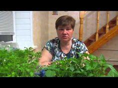 """Результат посадки в """"улитки"""". Избегайте ошибок! - YouTube Vegetable Garden, Landscape Design, Diy And Crafts, Seeds, Youtube, Flowers, Outdoor, Lawn And Garden, Outdoors"""