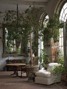Even though this sun room / garden room is a huge space, I think I would still feel cozy sitting in that comfy chair under the branches of that rather large tree...