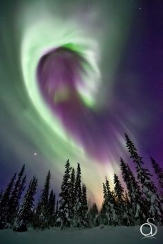 Borealis, Sweden ~A beautiful curved band of aurora over snow covered trees in Swedish Lapland.Aurora Borealis, Sweden ~A beautiful curved band of aurora over snow covered trees in Swedish Lapland. Beautiful Sky, Beautiful World, Beautiful Places, Beautiful Pictures, Stunningly Beautiful, All Nature, Science And Nature, Amazing Nature, Science Space