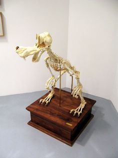 Skeletons Of Cartoon Characters Sculpture Skullpture - Skeletons favourite childhood cartoon characters