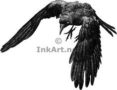 Displaying (19) Gallery Images For Crow Drawing...