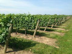 JACKSON-TRIGGS #Niagara #vignobles #vin #Wine #Vineyards
