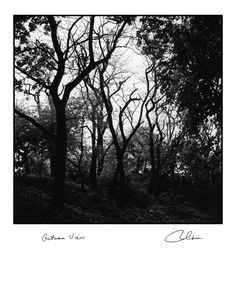 """""""Nature: Autumn View"""", Vintage Black & White seashore village photograph by Robert Gambee. The New York Times says, """"Gambee Photos Speak Magic."""". Digital C print. Limited edition, hand -signed and titled by the photographer, Robert Gambee. Over 1500 of his images are in major museums. The original of this image was taken with a twin lens Roleiflex Camera in Central Park, New York around 1980. All ten of his photography books are at Amazon. He is considered a living Bernice Abbott."""