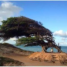 Árvore do amor/ RN