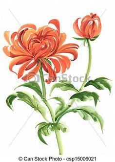 Stock de fotos naranja, Crisantemo- - Imagenes almacenadas, imágenes, fotografias libres de derechos, inventario de fotografo, inventario de fotografos, retrato, retratos, grafico, graficos