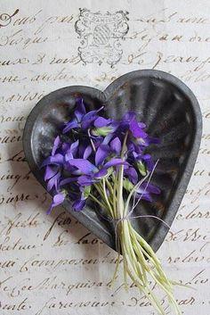 #violets #veilchen