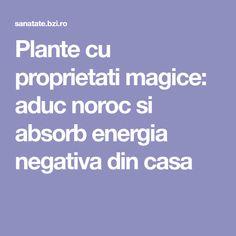 Plante cu proprietati magice: aduc noroc si absorb energia negativa din casa