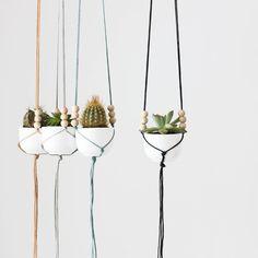 Hæng ud med hængende planter