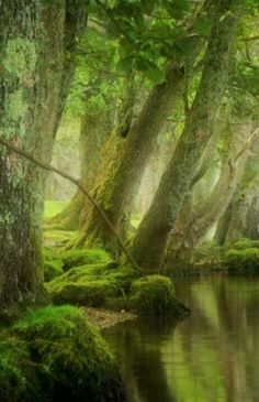 This picture is amazing. The forest looks so enchanting, and the soft light brings fairytale charm.