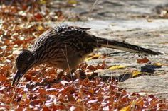 Give Fall Birds the Best With These Feeding Tips & Great Fall Foods!  #Outdoor #Bird #Feeder http://fixfind.com/Home/ProductInquiry/ProductDetail.aspx?ItemID=1-10025