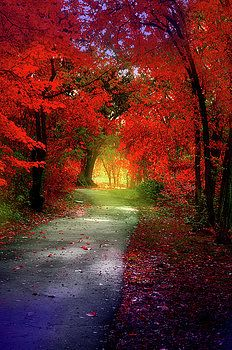 Through the Crimson Leaves to a Golden Beginning by Tara Turner