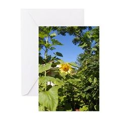 COTTAGE SUNFLOWER Greeting Cards