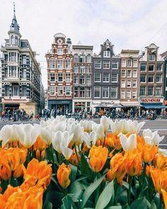 Весенний Амстердам - Путешествуем вместе
