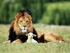 And the Lamb will lie down with the Lion
