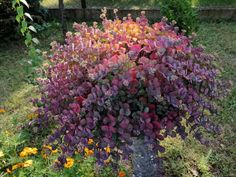 Gardening, Plants, Lawn And Garden, Flora, Plant, Horticulture, Square Foot Gardening, Garden Care