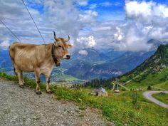 #mountainbike #mountains #biken #today #weekend #top #nottohot #wheather #hahnenkamm #reutte #reutteurlaub #tannheimerberge #tirol #austria #tiere #kühe #undso #horns #bell #dreamview #liab #mountainscape #nature #clouds #rainywheather #suncomesout #reuttenerseilbahnen #bike #sport #cube Weekender, Tirol Austria, Horns, Clouds, Mountains, Sport, Instagram, Nature, Top