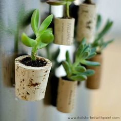 Here are ideas for planting succulents in various container gardens: from our newe Bombay planters to miniature gardens to DYI wine cork magnet planters.