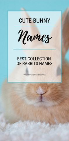 Bunny Names Best List + 150 Cute & Funny Names Rabbit Names, Bunny Names, Mini Lop Bunnies, Cute Bunny, Cute Pet Names, Rabbit Hutches, Honey Bunny, Cute Little Animals, Pet Rabbit