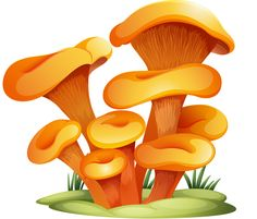 "Photo from album ""Грибы"" on Yandex. Mushroom House, Mushroom Art, Mushroom Fungi, Cartoon Mushroom, Illustrations, Illustration Art, Vegetable Illustration, Bolet, Murals For Kids"