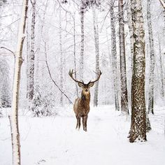 Robert Jahns @nois7 Get outside every...Instagram photo | Websta (Webstagram)