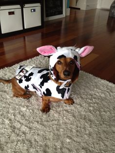 Moo! Aren't I just UDDERly adorable?!