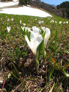 Hello spring, goodbye snow! Hello Spring, Snow, Pretty, Plants, Garden, Garten, Planters, Gardening, Outdoor