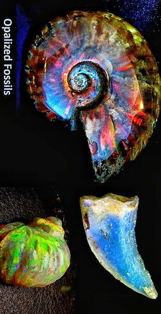 Opalized Fossils Source by LindyLeeTreasur Minerals And Gemstones, Crystals Minerals, Rocks And Minerals, Stones And Crystals, Amber Fossils, Extinct Animals, Cool Rocks, Ammonite, Rocks And Gems