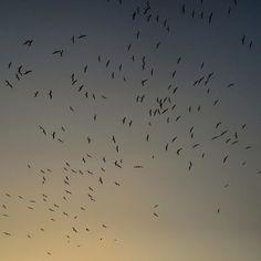 Looking at the sky    #nature #photography #landskapephotography #travel #travelphotography #natgeo #natgeotravel #sky  #palmtrees #pelican #fly #blue #sky #beach #nikon #nikontop #nikonphotography #nikon_official #instapic #nikonworld_ #nikontop_  #dailythreep #daily3p #camiloyepesph